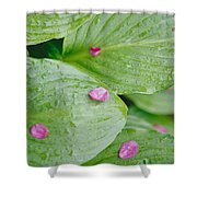 Pink Flower Petals Resting On Dew Shower Curtain