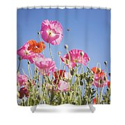 Pink Flowers Against Blue Sky Shower Curtain