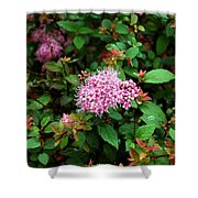 Pink Flowers Of Little Bavaria Shower Curtain