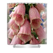 Pink Foxglove Shower Curtain by Lainie Wrightson