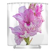 Pink Gladiolus Shower Curtain