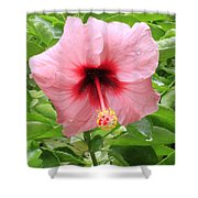 Pink Hibiscus V2 Shower Curtain