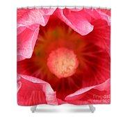 Pink Hollyhock 2 Shower Curtain