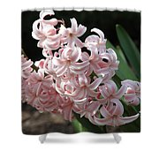Pink Hyacinth Shower Curtain