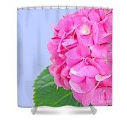 Pink Hydrangea Shower Curtain