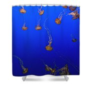 Pink Jellyfish Floating In A Tank At Shower Curtain