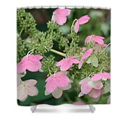 Pink Lace Shower Curtain