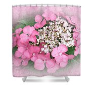 Pink Lace Cap Hydrangea Flowers Shower Curtain