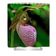Pink Lady Slipper Orchid Dspf232 Shower Curtain