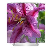 Pink Lily After The Rain Shower Curtain