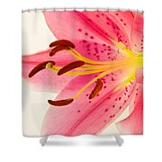 Pink Lily Square Version Shower Curtain