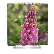 Pink Lupine Shower Curtain