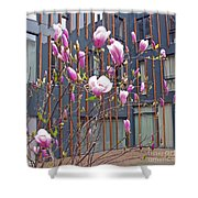 Pink Magnolia. Square Format Shower Curtain