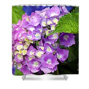 Pink Mophead Hydrangea Shower Curtain