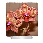 Pink Orchid2 Shower Curtain