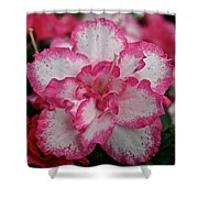 Pink Party Shower Curtain