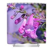 pink Penstemon  Shower Curtain