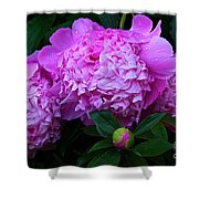 Pink Peonies In The Rain Shower Curtain
