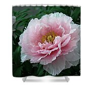 Pink Peony Flowers Series 2 Shower Curtain