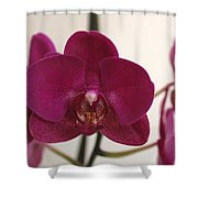 Pink Phalaenopsis Orchid  Shower Curtain