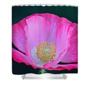 Pink Poppy 2 Shower Curtain
