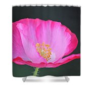 Pink Poppy 3 Shower Curtain
