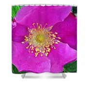 Pink Portulaca Shower Curtain