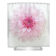 Pink Precious In White Shower Curtain