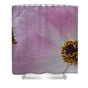 Pink Prickly Poppy Shower Curtain