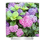 Pink Purple Hydrangeas Shower Curtain