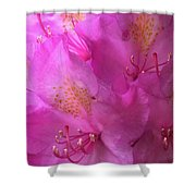 Pink Rhododendron Bloom  Shower Curtain