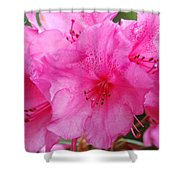 Pink Rhody Shower Curtain