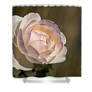 Pink Rose Blossom Shower Curtain