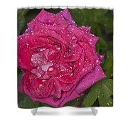 Pink Rose Wendy Cussons With Raindrops Shower Curtain