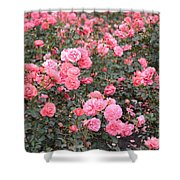 Pink Roses Canvas Shower Curtain