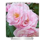 Pink Roses II Shower Curtain