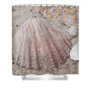 Pink Scallop Shell Shower Curtain