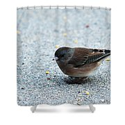 Pink-sided Junco Shower Curtain