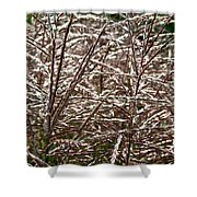Pink Silver Shower Curtain