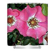 Pink Single Roses Shower Curtain