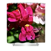Pink Snap Shower Curtain