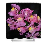 Pink Snapdragons 2 Shower Curtain