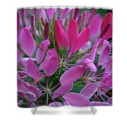 Pink Spider Flower Shower Curtain