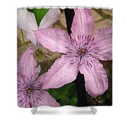 Pink Stars Shower Curtain