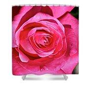 Pink Sunrise Rose Shower Curtain