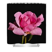 Pink Tea Rose Shower Curtain