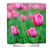 Pink Tulip Bed Shower Curtain