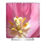 Pink Tulip Flower Prints Spring Tulips Floral Shower Curtain