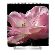 Pink Tulip Isolated Shower Curtain