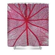 Pink Veins Shower Curtain